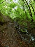 The stream flows down from the mountainside in the spring forest. Hiking trail royalty free stock image