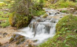 A stream flows in the forest, Italian Alps stock photo