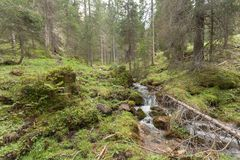 A stream flows in the forest, Italian Alps stock images