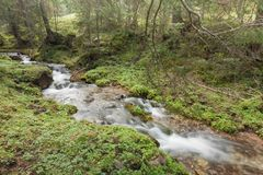 A stream flows in the forest, Italian Alps stock image