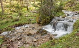 A stream flows in the forest, Italian Alps stock photography