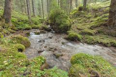A stream flows in the forest, Italian Alps royalty free stock image