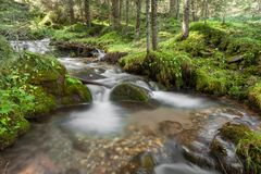 A stream flows inside the woods in Alto Adige stock photos