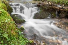A stream flows inside the woods in Alto Adige royalty free stock images