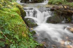 A stream flows inside the woods in Alto Adige stock image