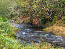 Stream flows pass autumn colored leaves Stock Photography