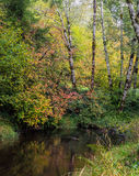 Stream flows pass autumn colored leaves Royalty Free Stock Photography