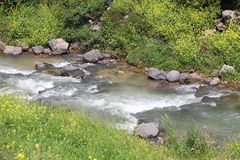 A stream flows between the rocks. And plants royalty free stock photo