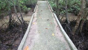 Stream flows of the root system of mangroves. Bridge over a stream in the mangroves stock footage