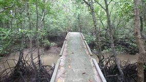 Stream flows of the root system of mangroves. Bridge over a stream in the mangroves stock video footage