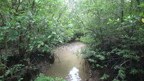Stream Flows of the Root System of Mangroves stock video