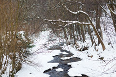 stream flows in the snowy forest Royalty Free Stock Image