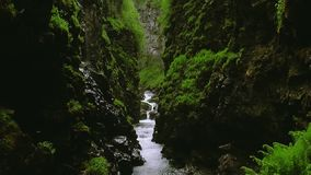 Stream flows between two mountains covered by lot greenery. Summer day. Landscape. Nature. Wet stones stock video footage