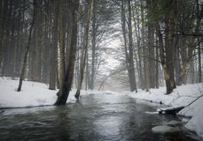 Stream in Foggy Forest Royalty Free Stock Photo