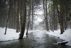 Stream in Foggy Forest Royalty Free Stock Photography