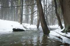 Stream in Foggy Forest Royalty Free Stock Images