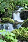 Stream in the Forest Royalty Free Stock Photo