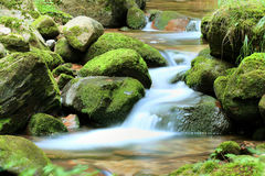 Stream in the Forest Royalty Free Stock Images