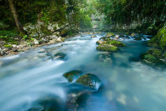 Stream in a forest. Misty stream in a forest with rocks and stones covered with moss, Calore River, Cilento and Vallo di Diano National ParK, Italy royalty free stock image