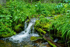 Stream in forest Royalty Free Stock Photos
