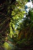 Stream Through Forest Stock Photo