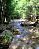 Stream in the forest. A forest stream in the White Mountains of New Hampshire Royalty Free Stock Photos