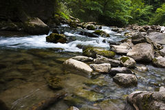 Stream in the forest. A river flow over the trees in a forest of Navarra, in Spain Stock Image