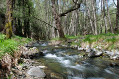 Stream in the forest. From Cyprus nature Stock Photography