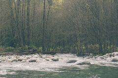 Stream by Forest Royalty Free Stock Photography