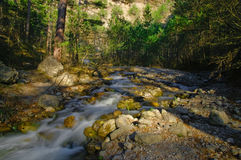 Stream in forest. Scenic view of stream flowing through forest Royalty Free Stock Image