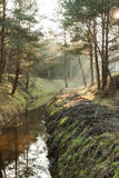 Stream in the forest Stock Photography