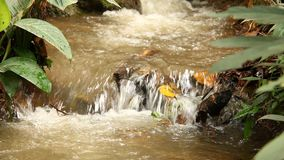 Stream in the forest , chiangmai Thailand.  stock footage