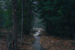 Stream in Forest at Dusk Royalty Free Stock Photography