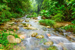 Stream in the forest. The stream is a form of natural streams in the water. In the Garden River built on both sides of the Taiwan Straits rocky, river water and Stock Images
