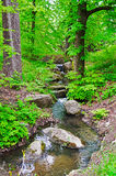 Stream in the forest. Stream in the green forest Royalty Free Stock Photography