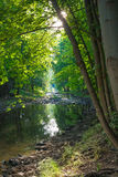 Stream in a forest IV Royalty Free Stock Image