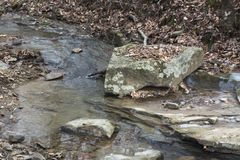Stream in the forest with large rock royalty free stock photography