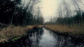 Stream in the forest in late autumn stock video footage