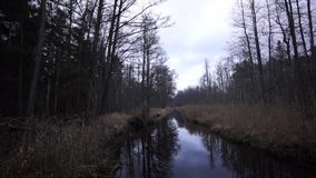 Stream in the forest in late autumn stock video