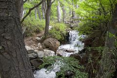 Stream in the forest at the Los Glaciares National Park, Argentina. Stream in the forest along the trail to Cerro Fitz Roy at the Los Glaciares National Park Stock Photo