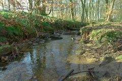 Stream, forest, natural, nature, calm, roots, water, woodland, water, Yorkshire. Trees, woodland, forest, natural, nature, calm, roots Royalty Free Stock Photography