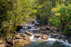 Stream in forest, Nature rill flow. Thailand Stock Photography