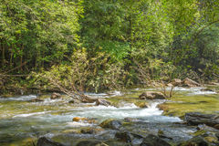 Stream in forest, Nature rill flow. Thailand Stock Photos