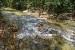 Stream in forest, Nature rill flow. Thailand Stock Image