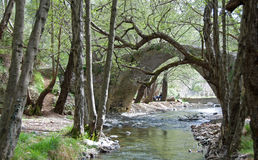 Stream in forest, Tzelefos Bridge Paphos Cyprus Royalty Free Stock Photo