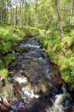 Stream in Forest Park wider. Stream in Queen Elizabeth Forest Park, Aberfoyle, Scotland Royalty Free Stock Photos