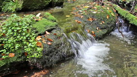 Stream in forest stock footage