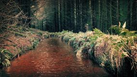 Stream Through Forest stock footage