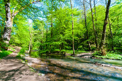 Stream in a forest Royalty Free Stock Photography