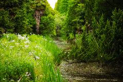 A stream in the forest. A slow moving stream stretches through dense vegetation, surrounded by plants, trees, grass and flowers Stock Image
